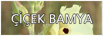 Amasya Çiçek Bamyası